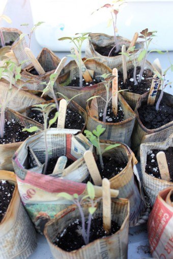 thestop-seedlings